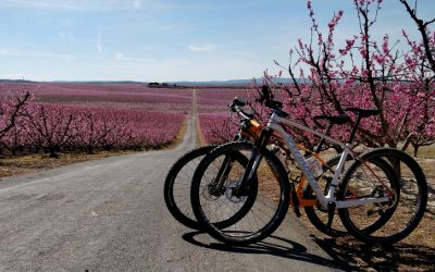 El mar rosa d'Aitona